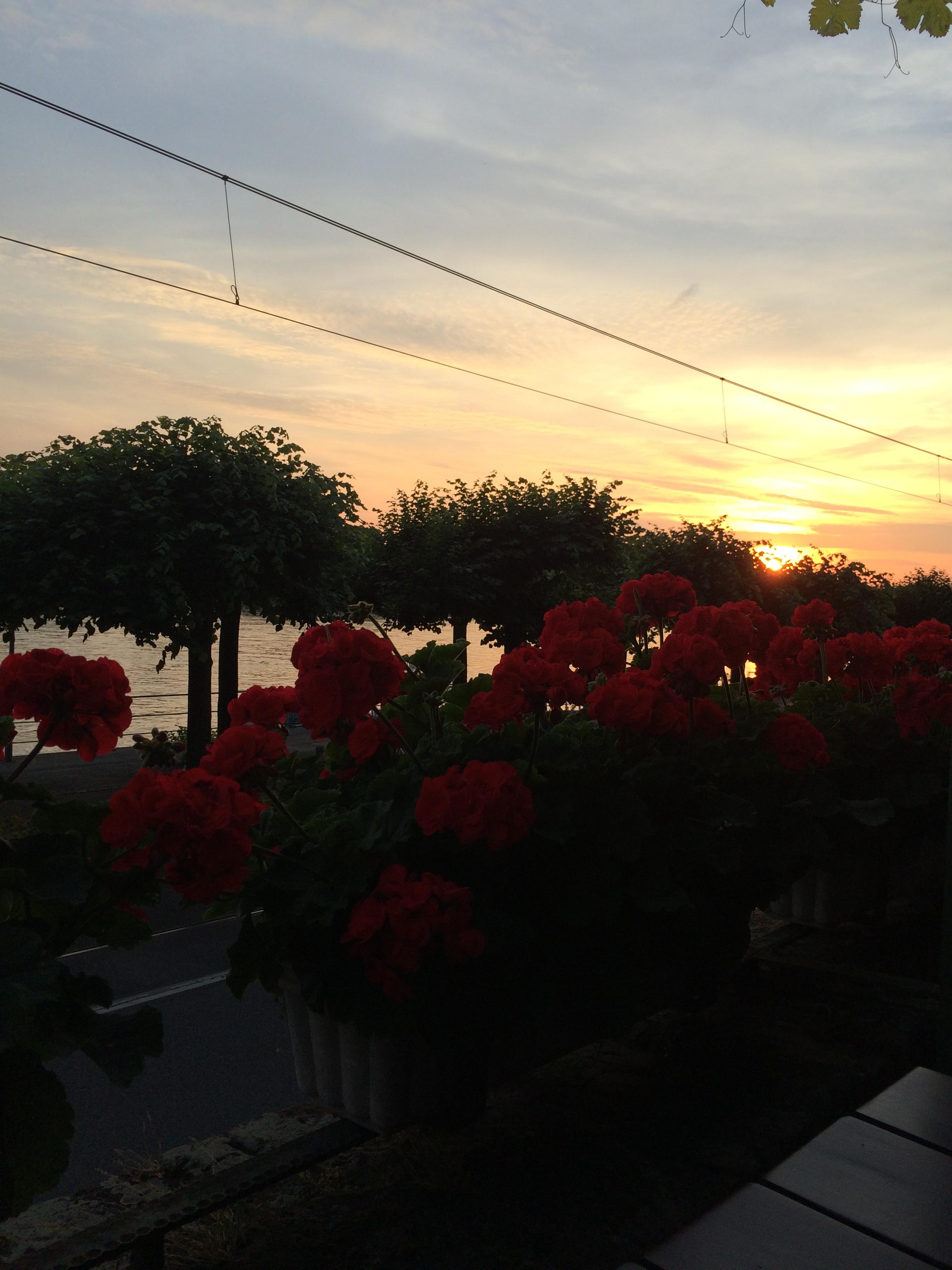 Geranien-behangene Terrasse